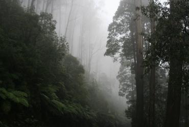 Woodlands Rainforest Retreat, Yarra Valley, Victoria