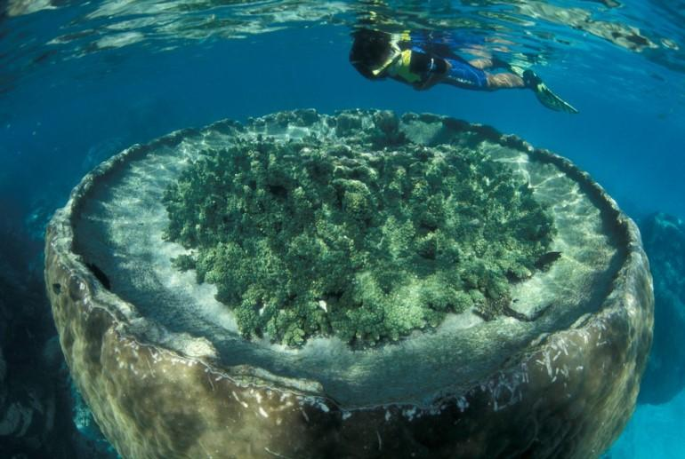 Sal salis ningaloo reef exmouth coral coast western australia romantic getaways and - Ningaloo reef dive ...